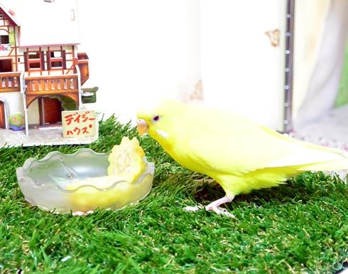 黄色同士1