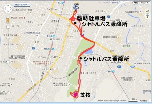 chichibisibazakura150505.jpg