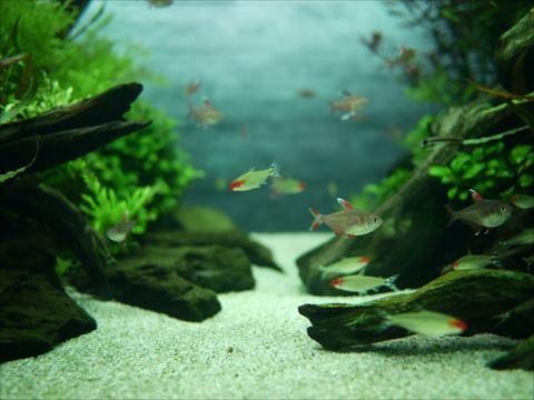 魚 12/26