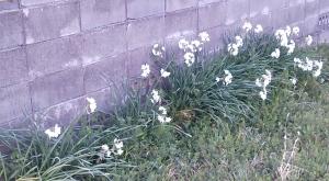 白い花2.18