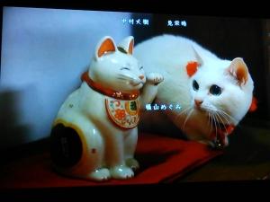猫侍その1