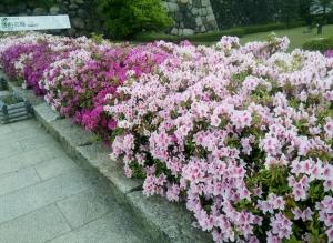 公園前の花