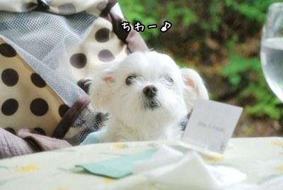 karuizawa-mukku_20150602214015a46.jpg