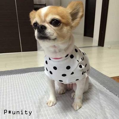 ドッドTシャツ(ピンク)1