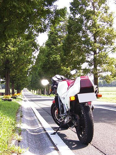 V6010242.jpg