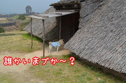 吉野ヶ里1