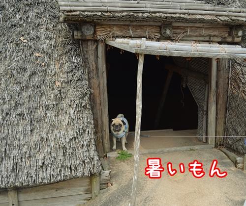 吉野ヶ里7