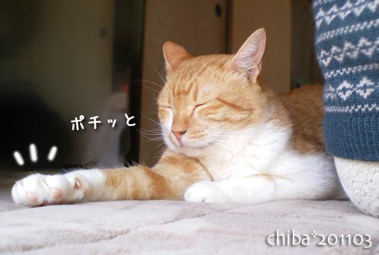 chiba11-3-75x.jpg