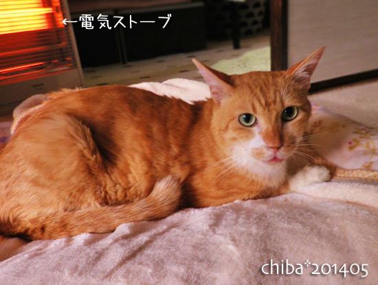 chiba14-05-72.jpg