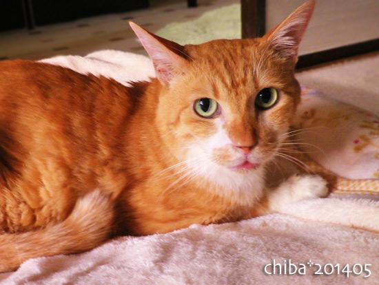 chiba14-05-73.jpg