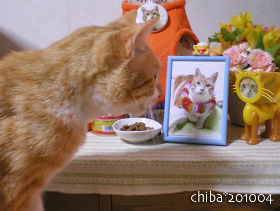 chiba14-12-28.jpg