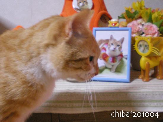 chiba14-12-29.jpg