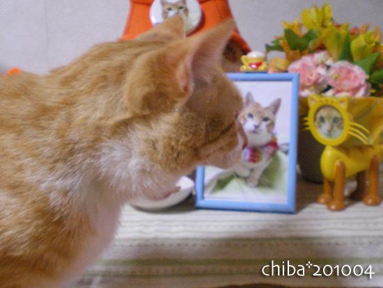 chiba14-12-30x.jpg