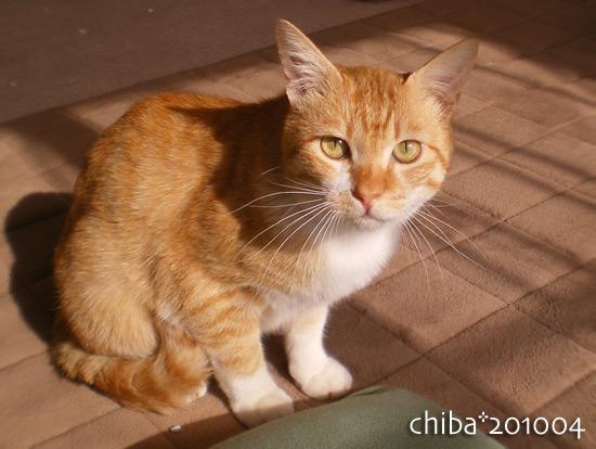 chiba14-12-36.jpg