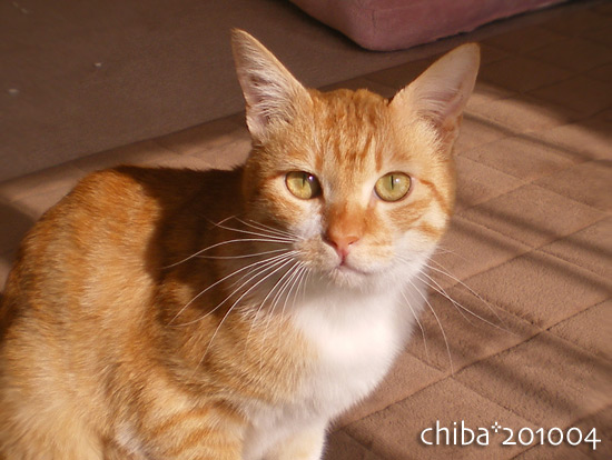 chiba14-12-37.jpg