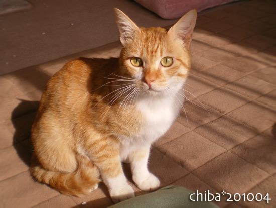 chiba14-12-38.jpg