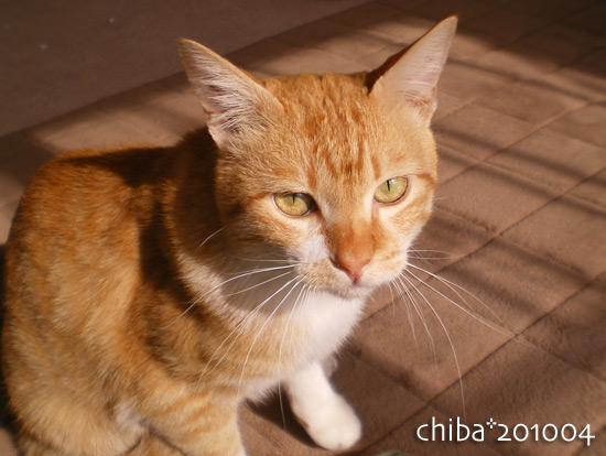 chiba14-12-39.jpg