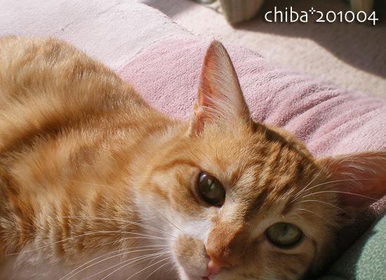 chiba14-12-41.jpg