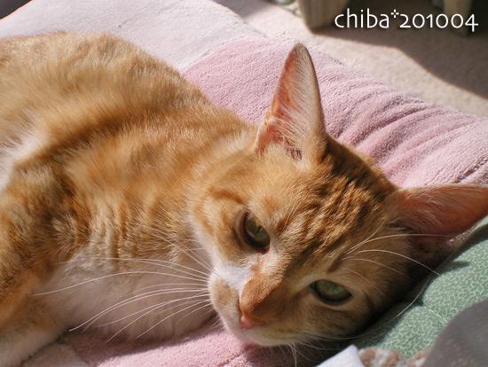 chiba14-12-42.jpg