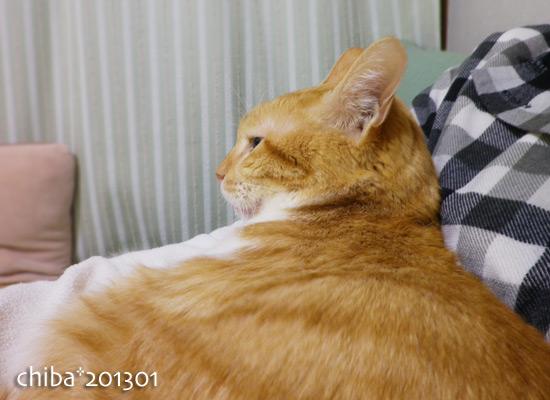 chiba15-01-08.jpg