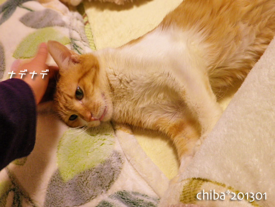 chiba15-01-15.jpg
