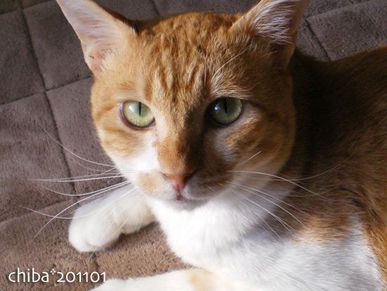 chiba15-01-61.jpg