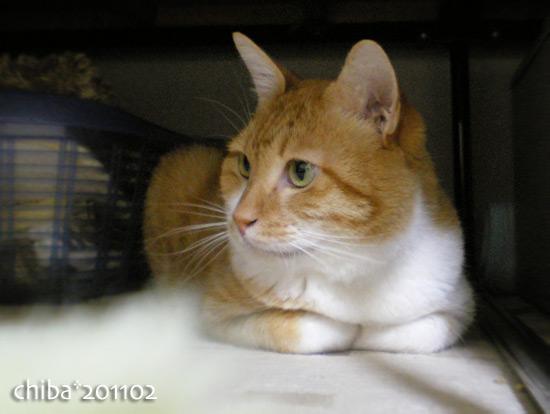 chiba15-02-03.jpg