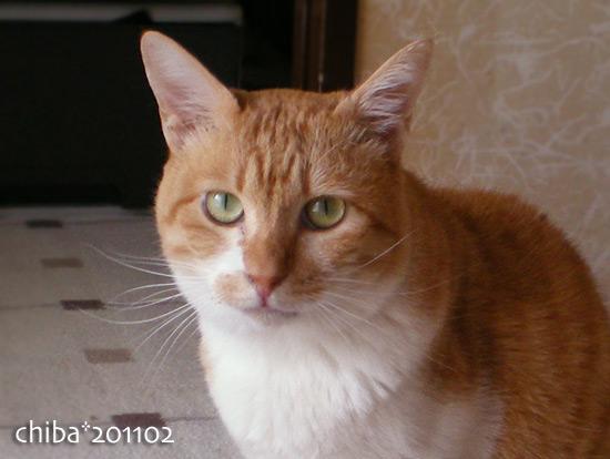 chiba15-02-07.jpg