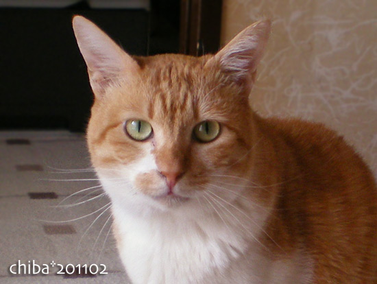 chiba15-02-08.jpg