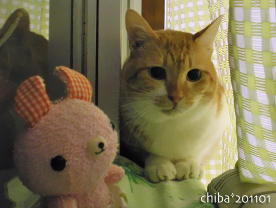 chiba15-02-20x.jpg