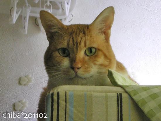 chiba15-02-37.jpg