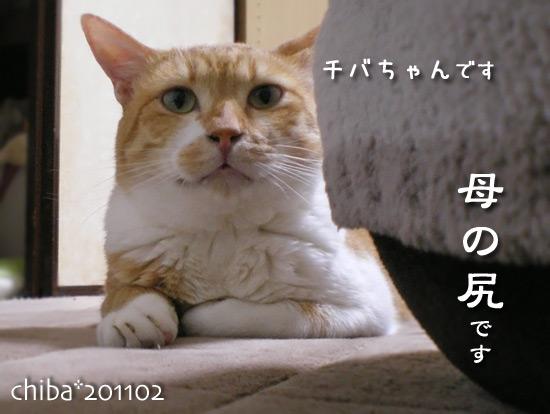 chiba15-02-63.jpg