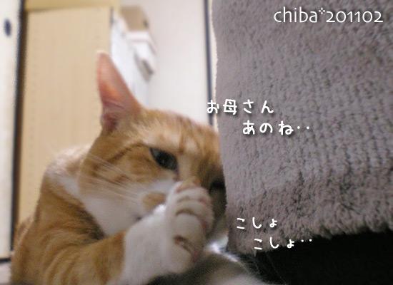 chiba15-02-64.jpg
