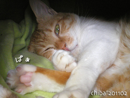 chiba15-02_54.jpg