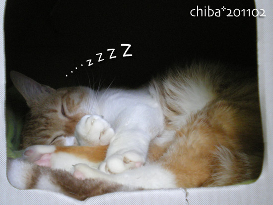 chiba15-02_55.jpg