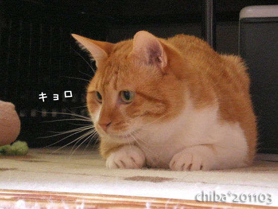 chiba15-03-06.jpg