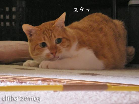 chiba15-03-14.jpg