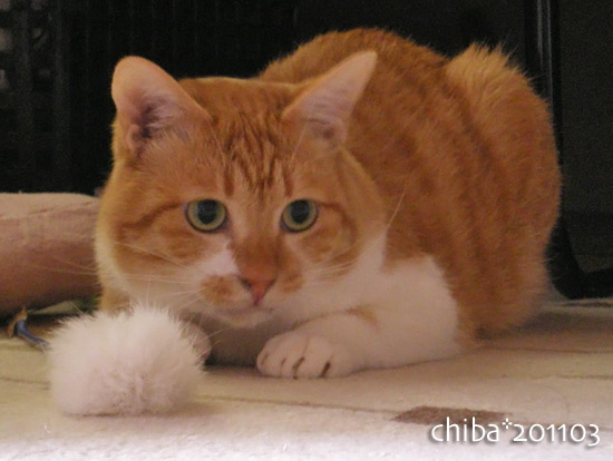 chiba15-03-19.jpg