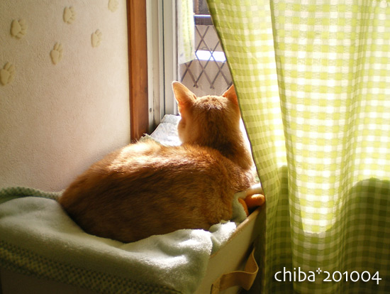 chiba15-03-49.jpg