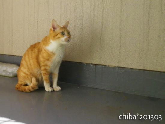 chiba15-03-69.jpg