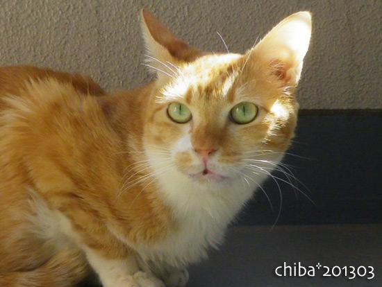 chiba15-03-71.jpg