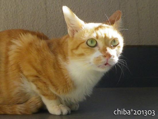 chiba15-03-74.jpg