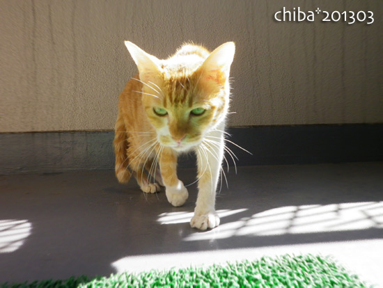 chiba15-03-75.jpg