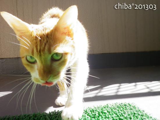 chiba15-03-76.jpg