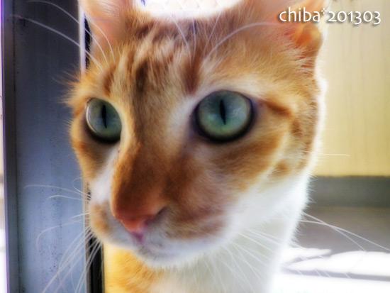 chiba15-03-77.jpg