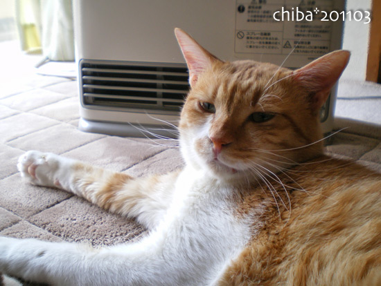 chiba15-03-78.jpg