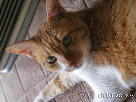 chiba15-03-83.jpg