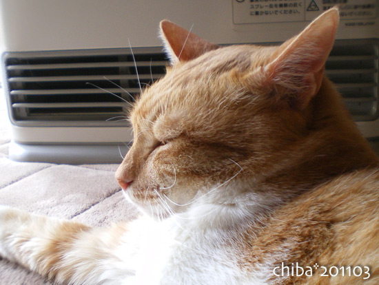 chiba15-03-85.jpg