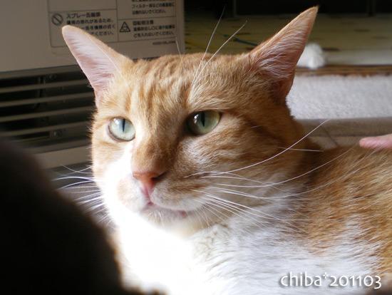chiba15-03-87.jpg