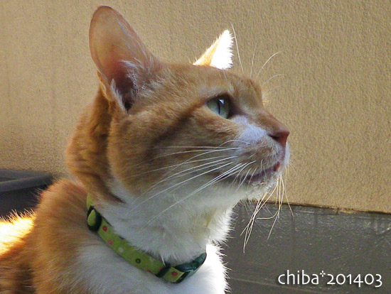 chiba15-04-16.jpg